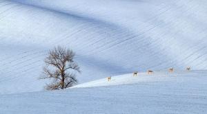 Zimní a vánoční