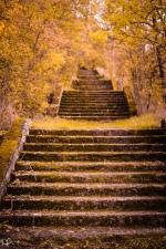 Cesta zlatavým sadem
