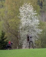 Jarni projížďka na koni