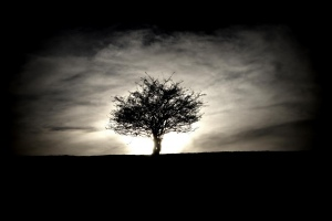 Osvícený keř