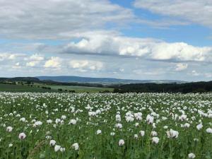 Makové pole