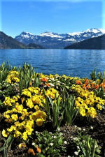 Jaro pod Alpami