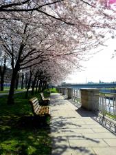 Rozkvetlá Ostrava