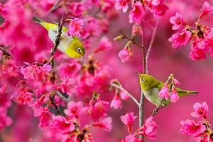 najít jaro