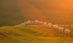 Nebeské světlo v sadě