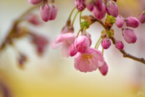Duben - květy fotit budem
