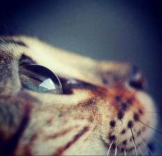 Kočičí oko
