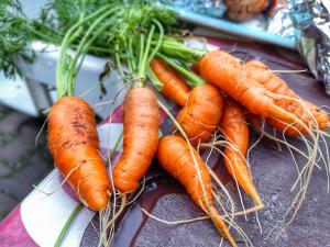 Domácí mrkev