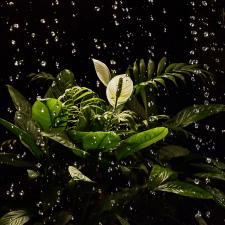 Květina za vodopádem