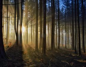 Mlhavý západ slunce na Vysočině