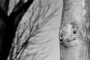 I stromy mají svou tvář (2)